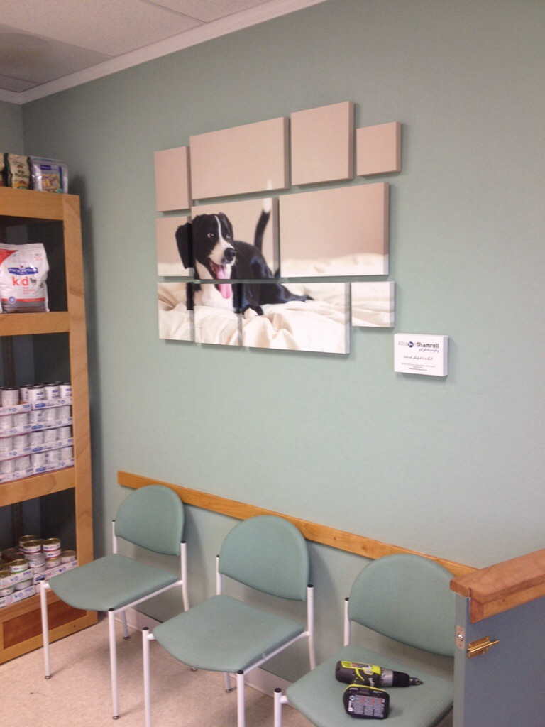 Awesome Veterinary Clinic Design Ideas Pictures ...