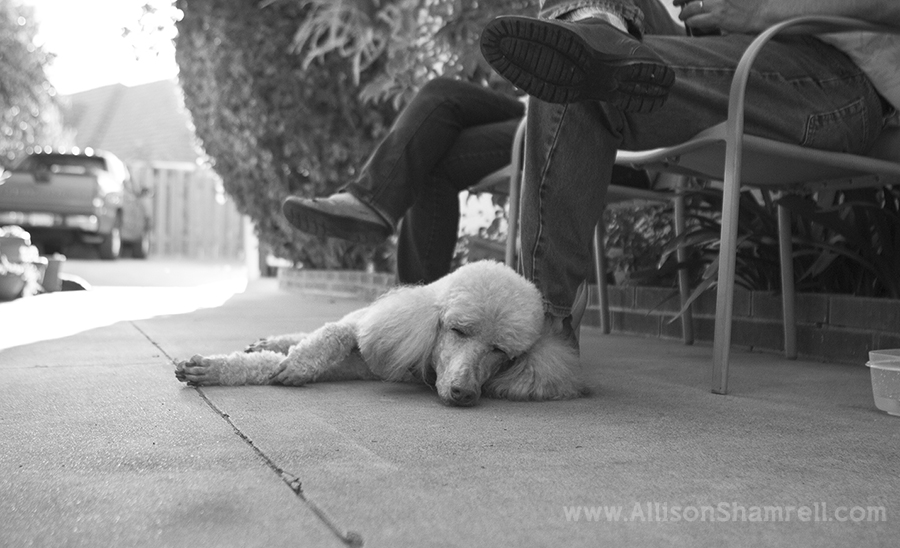 black & white escondido pet photography