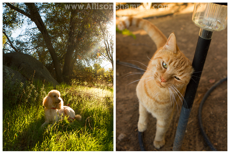 escondido dog cat photography