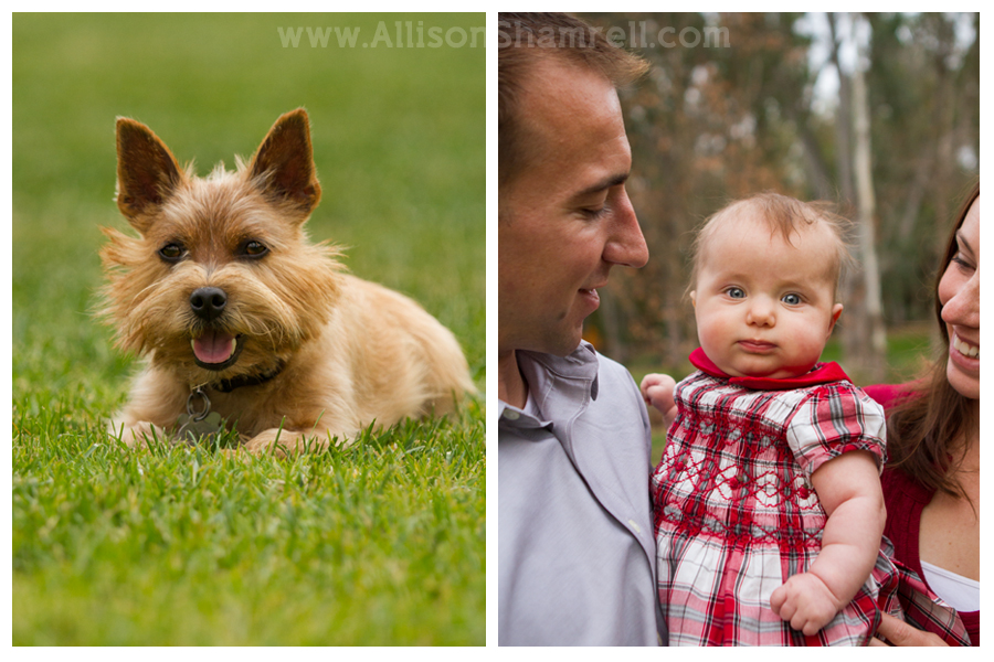 pet family photography