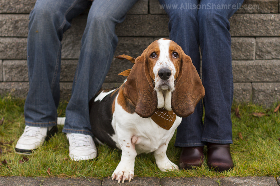basset_hound_and_family