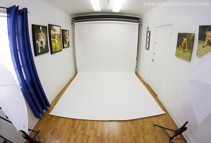 pet photo studio setup