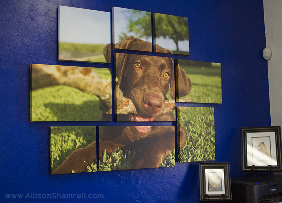 San Diego pet photography studio