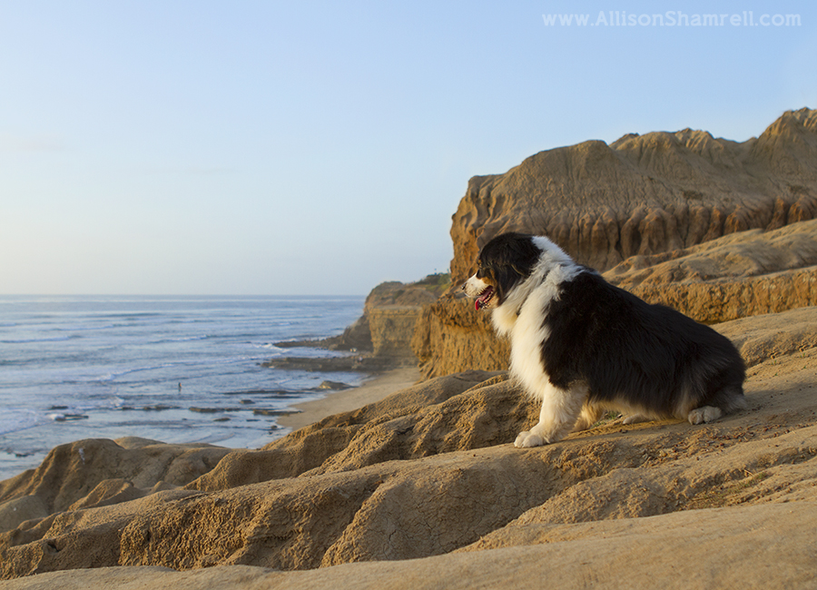 point loma pets photography