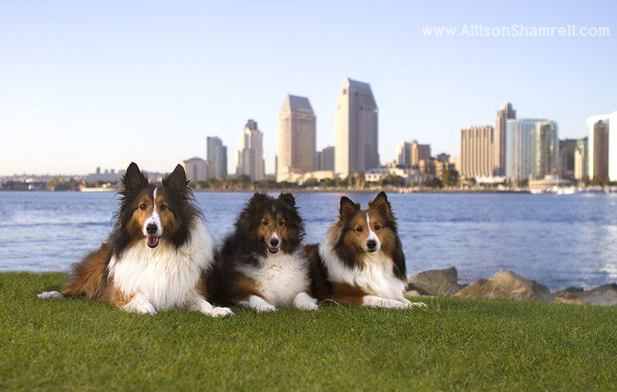 coronado pet photographs