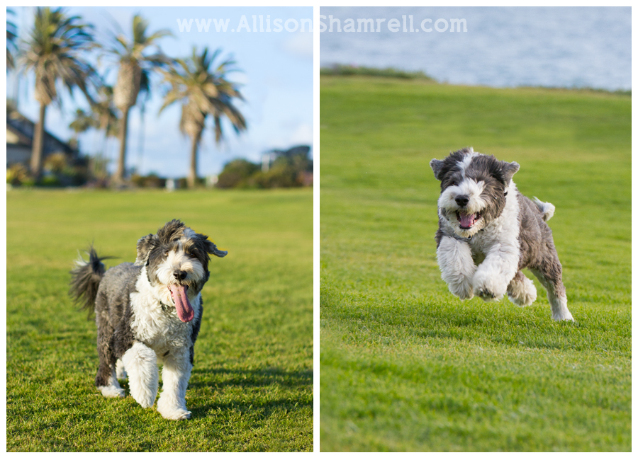 del mar dog photos