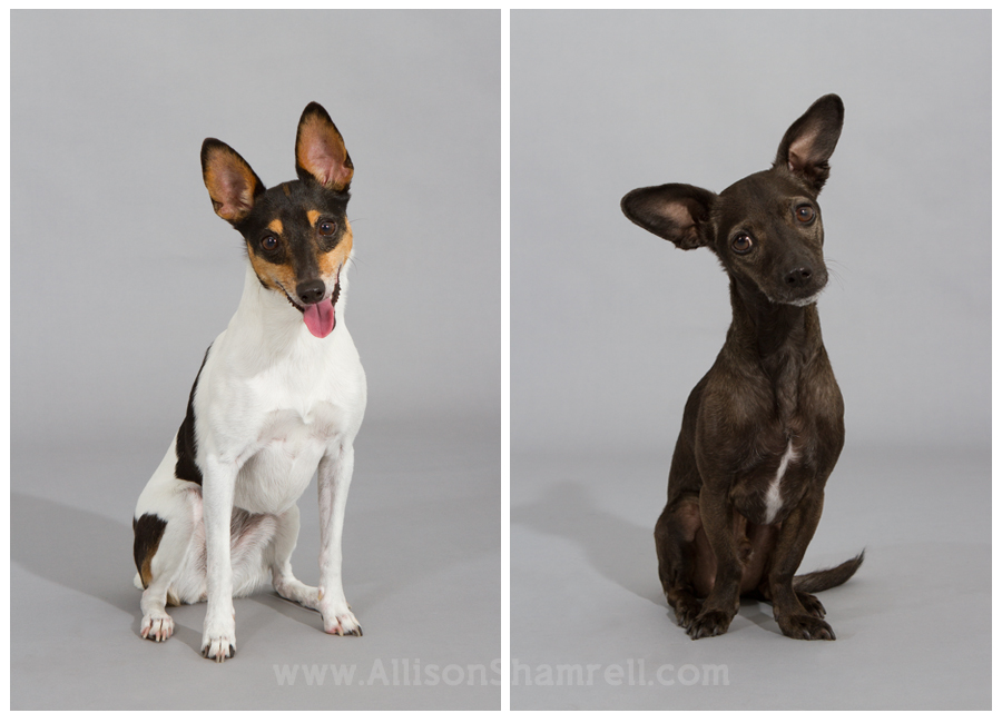 san diego dog photography