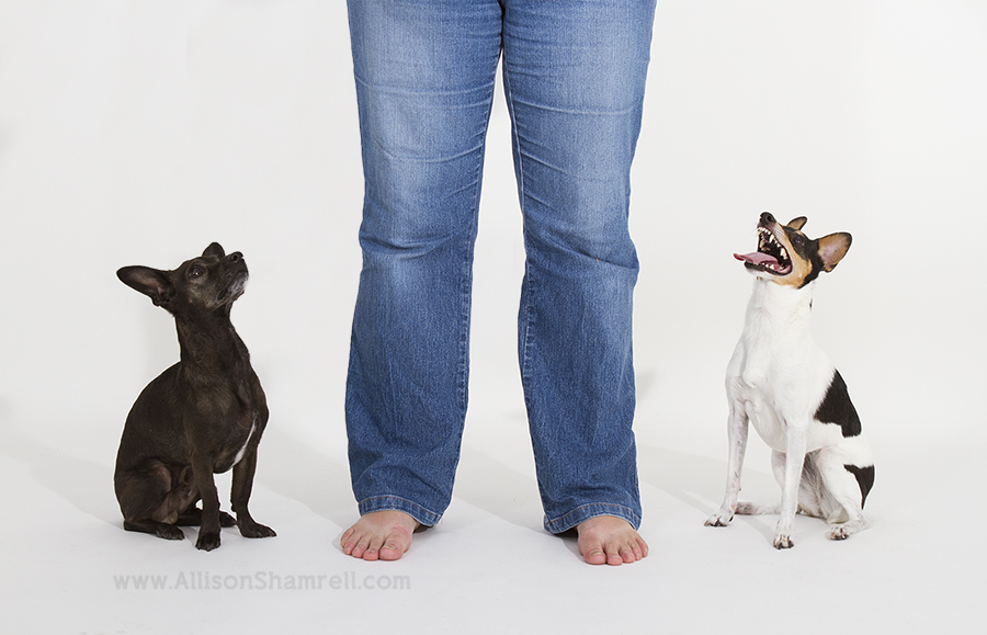 dog studio photography