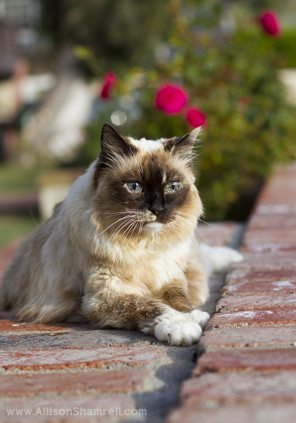 in-home cat photography