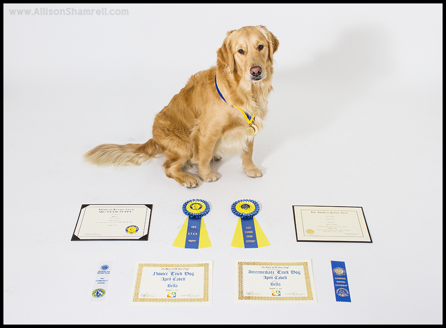 award winning dog