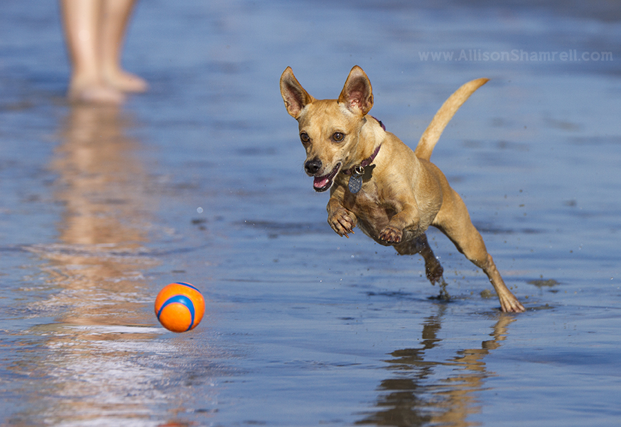 best dog chasing ball photo