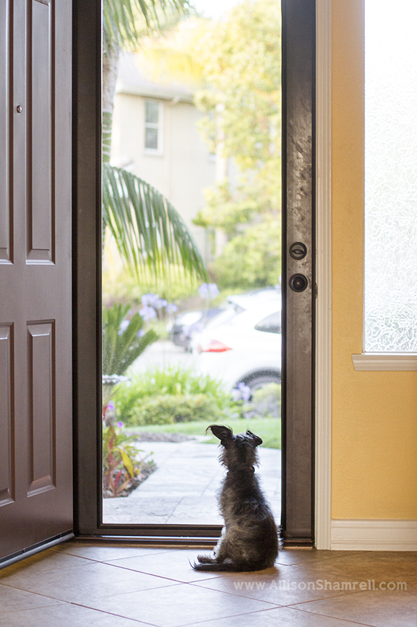 dog sitting at door