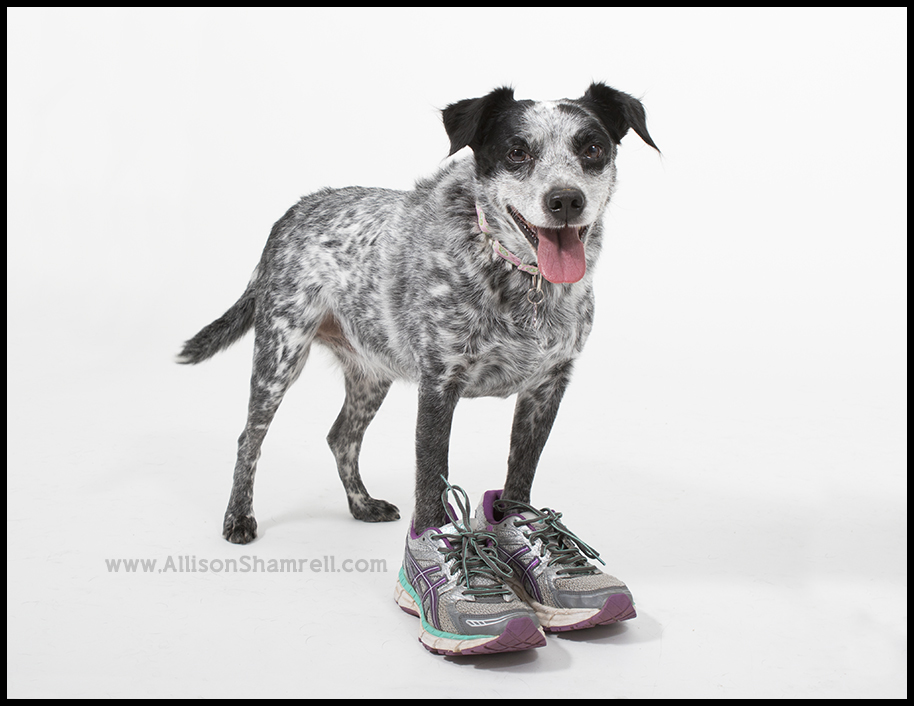 dog running shoes