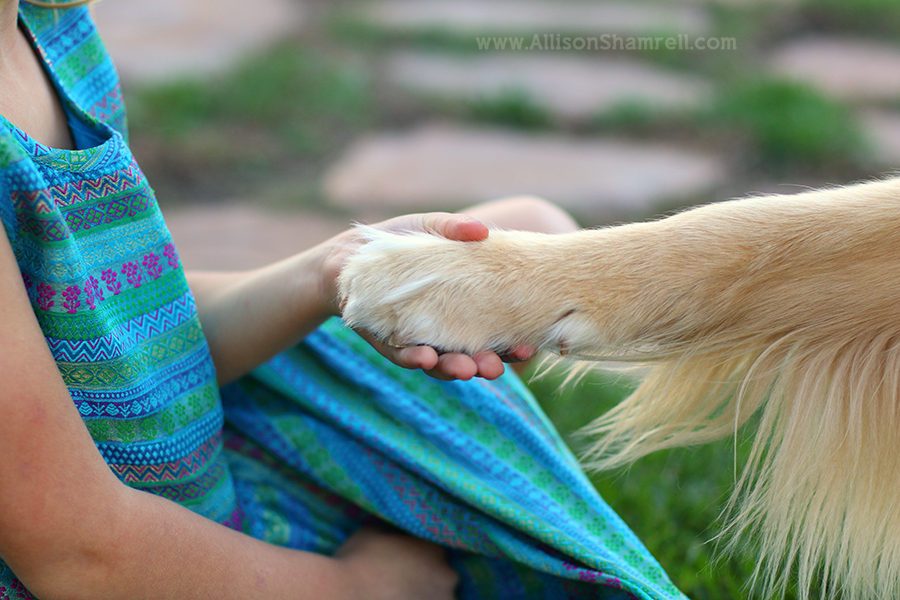 golden retriever paw