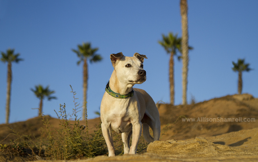 point loma dog photo