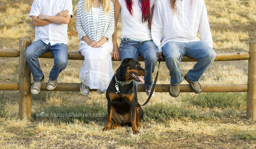 rottweiler family photo