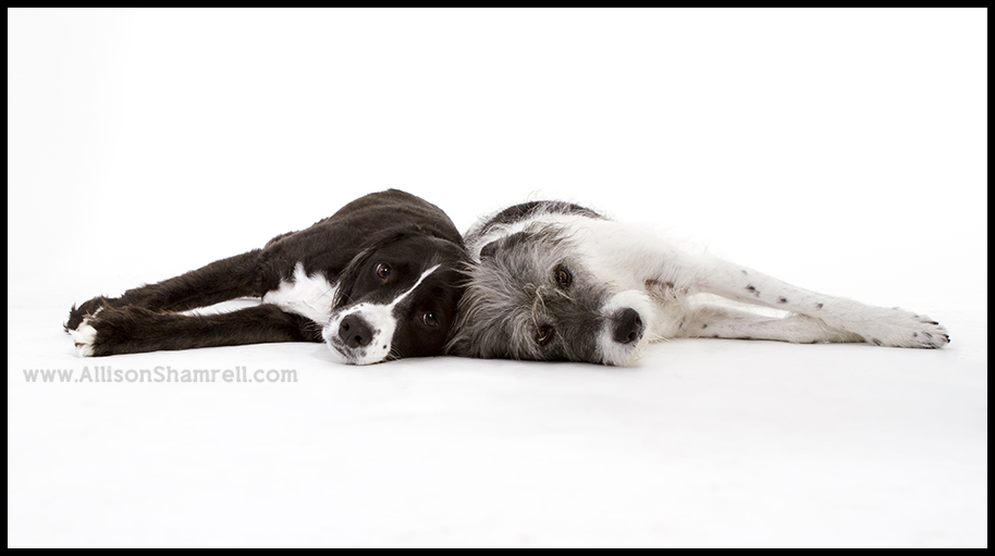 studio mutts photo