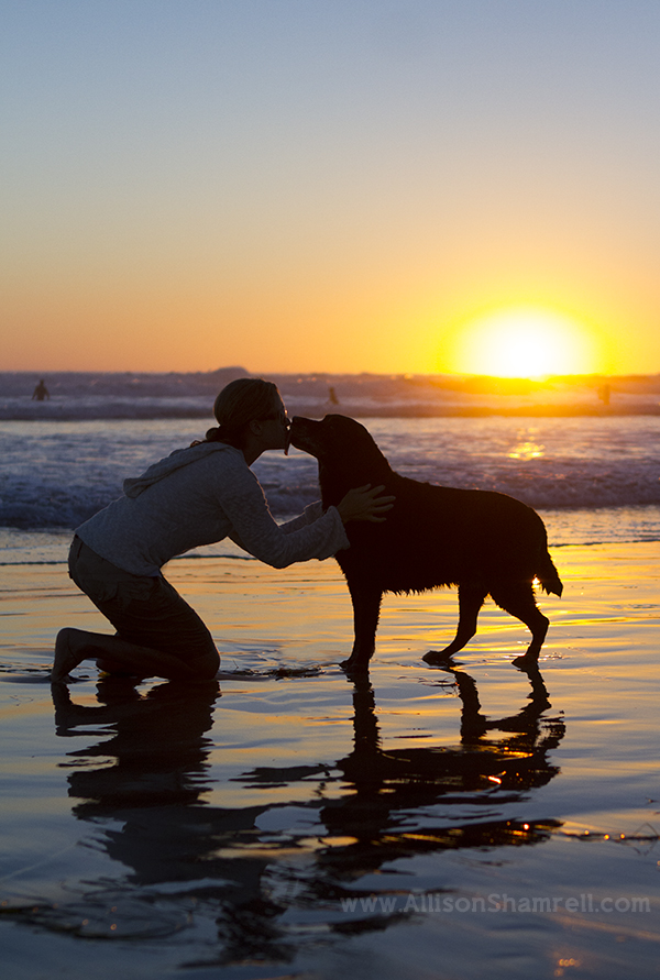 best sunset dog picture