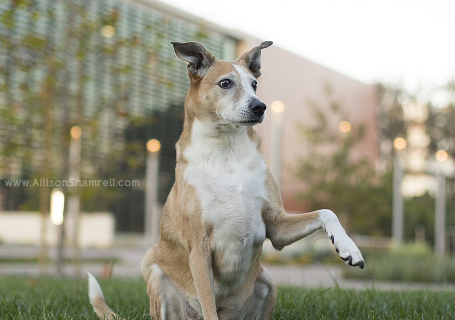 Best Dog Walks In San Diego