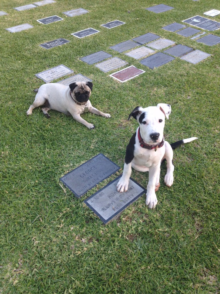 dogs in pet cemetery