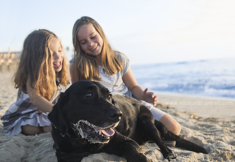 black lab with family