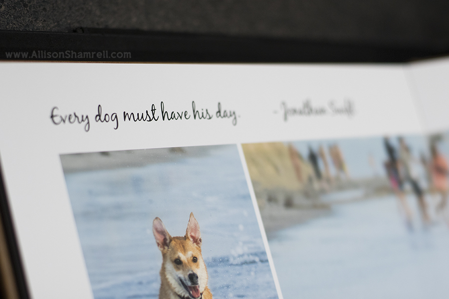 premium albums for pet photography