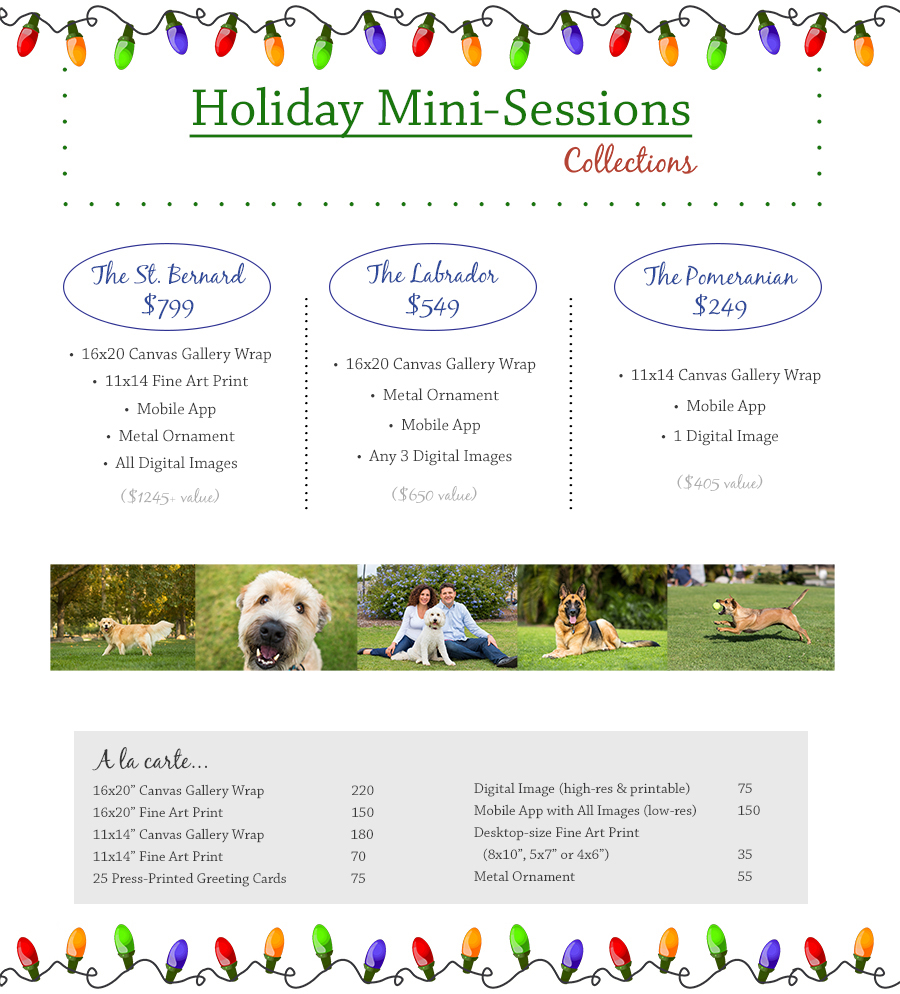 holiday pet mini-session pricing
