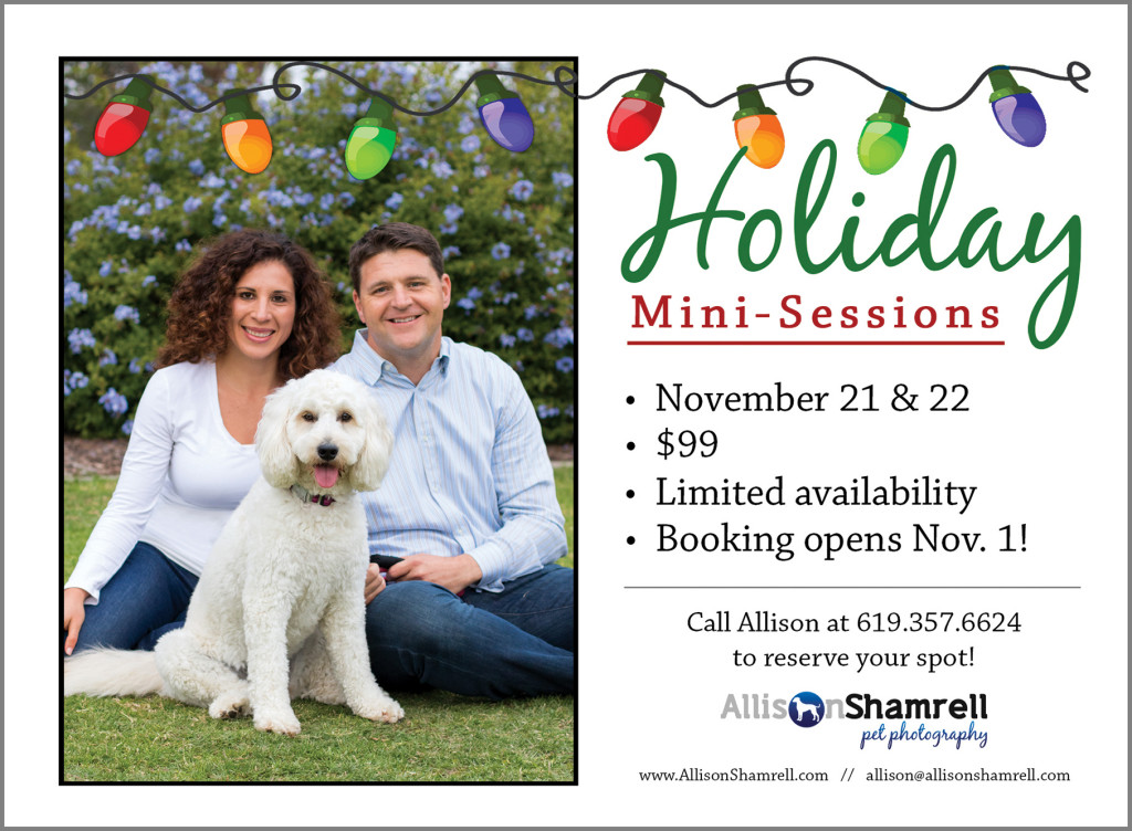 mini sessions pet photography