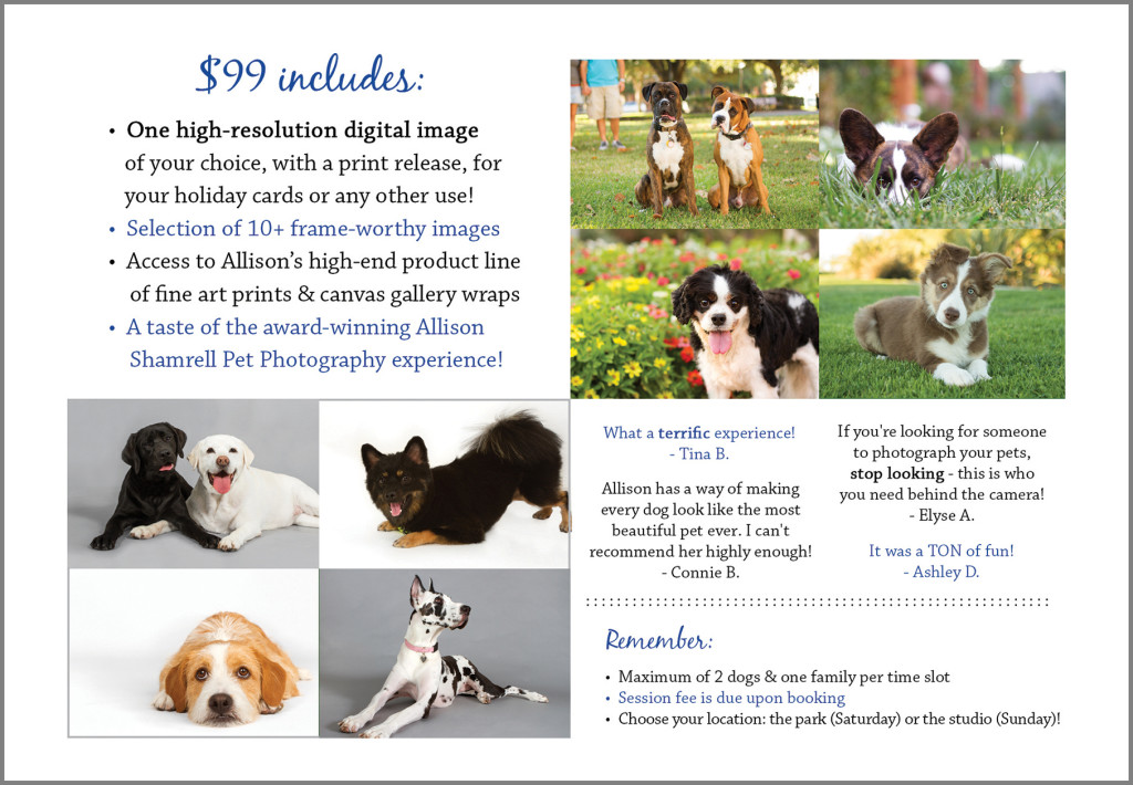 holiday mini sessions pet photography
