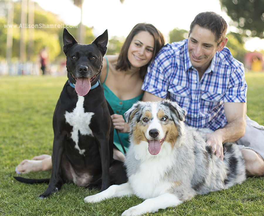 san diego pet photography