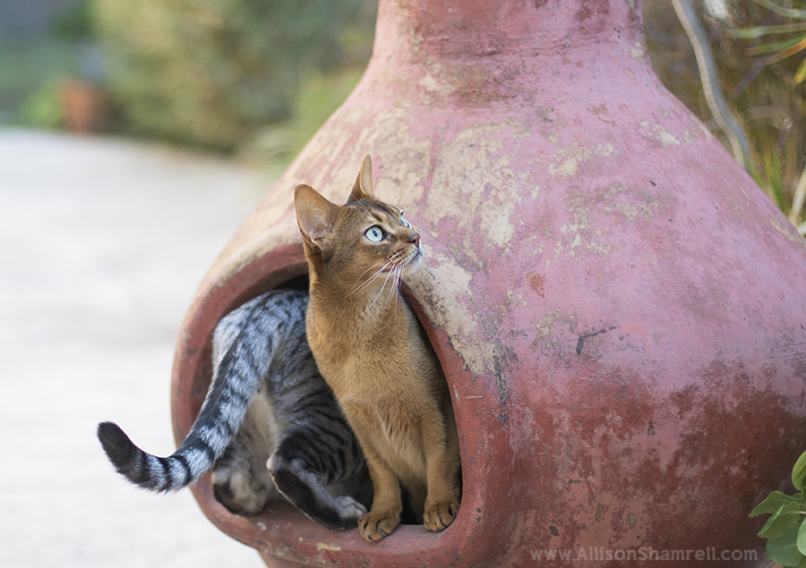 best_cat_photography_san_diego