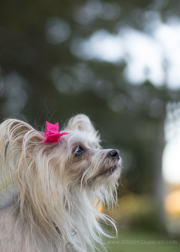 local_san_diego_pet_photography