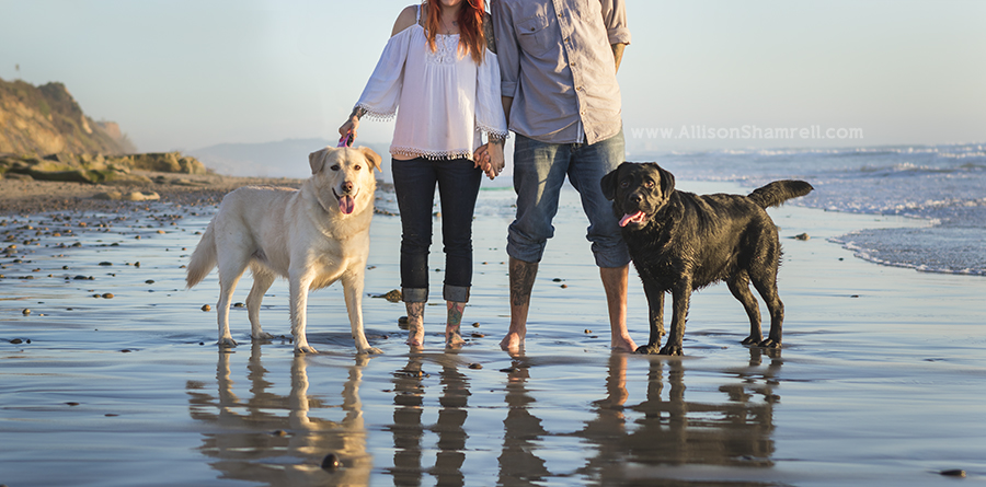 choose best pet photographer