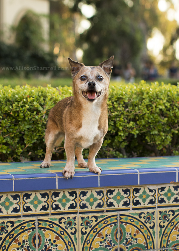happy dog in Balboa Park