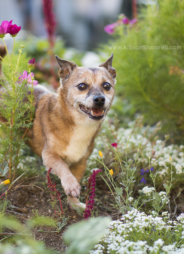 balboa park pet photography example
