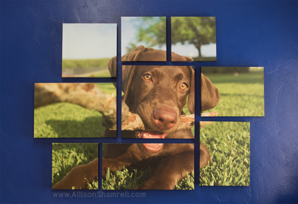 canvas collage pet photo