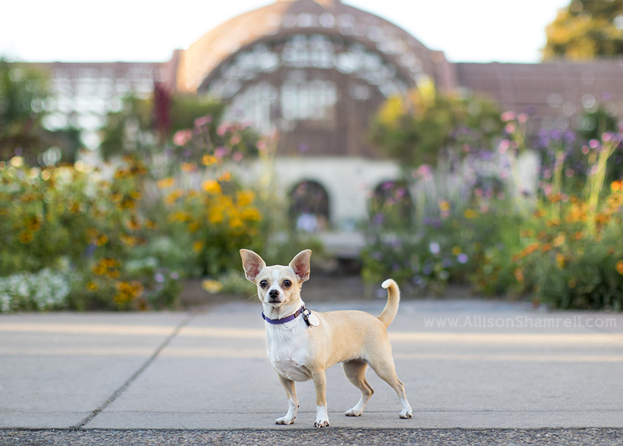 best pet photography in balboa park