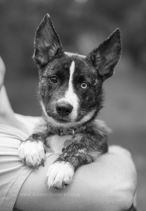 mixed breed puppy in arms