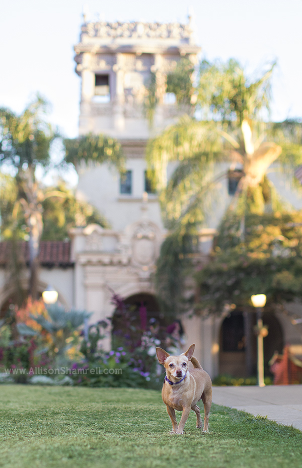 pet photography in balboa park