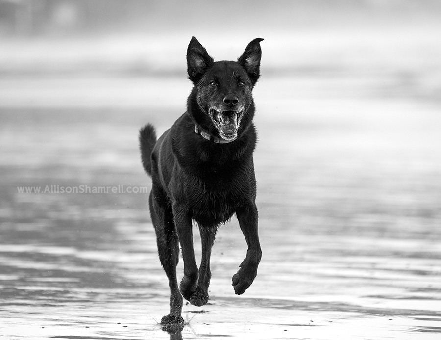 la jolla shores pet photography