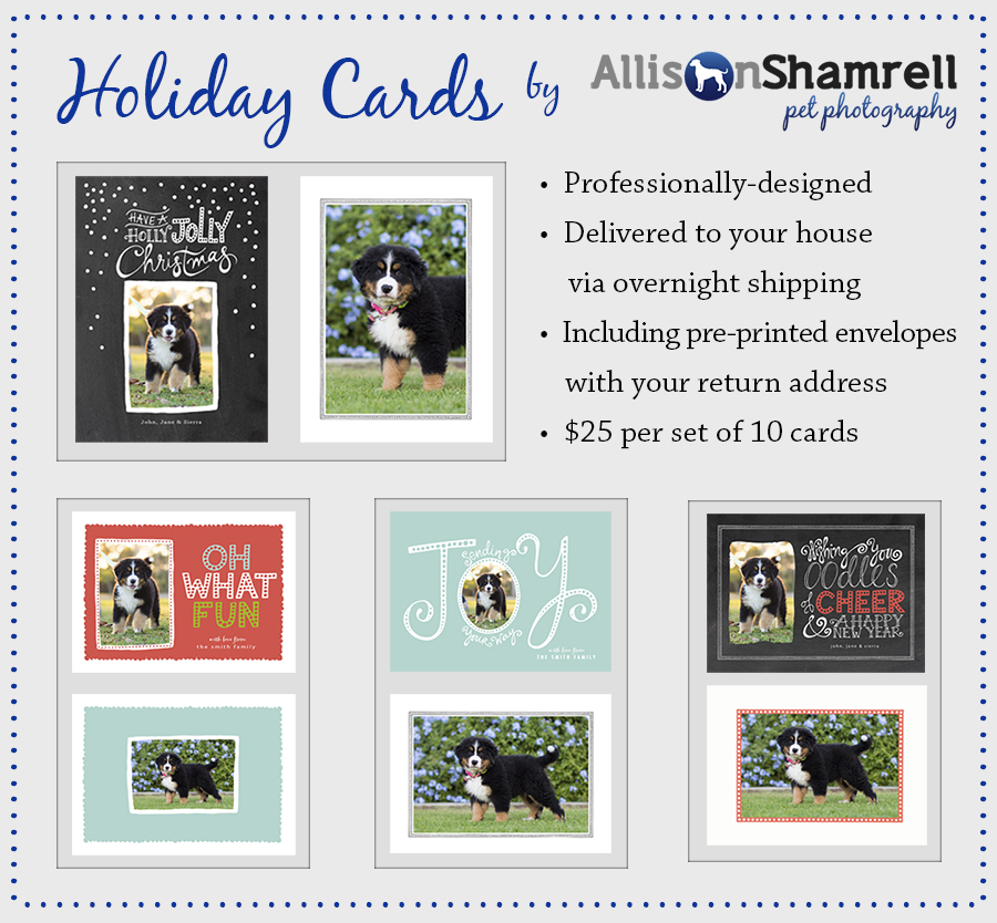 holiday cards for pet owners