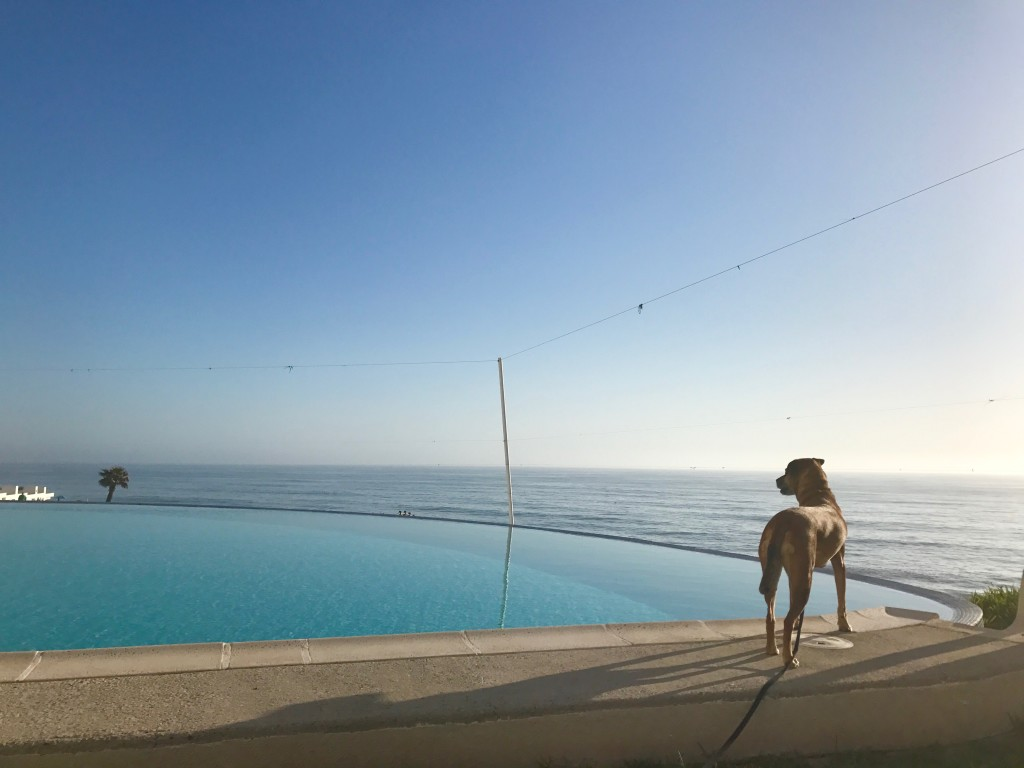 dog in Mexico