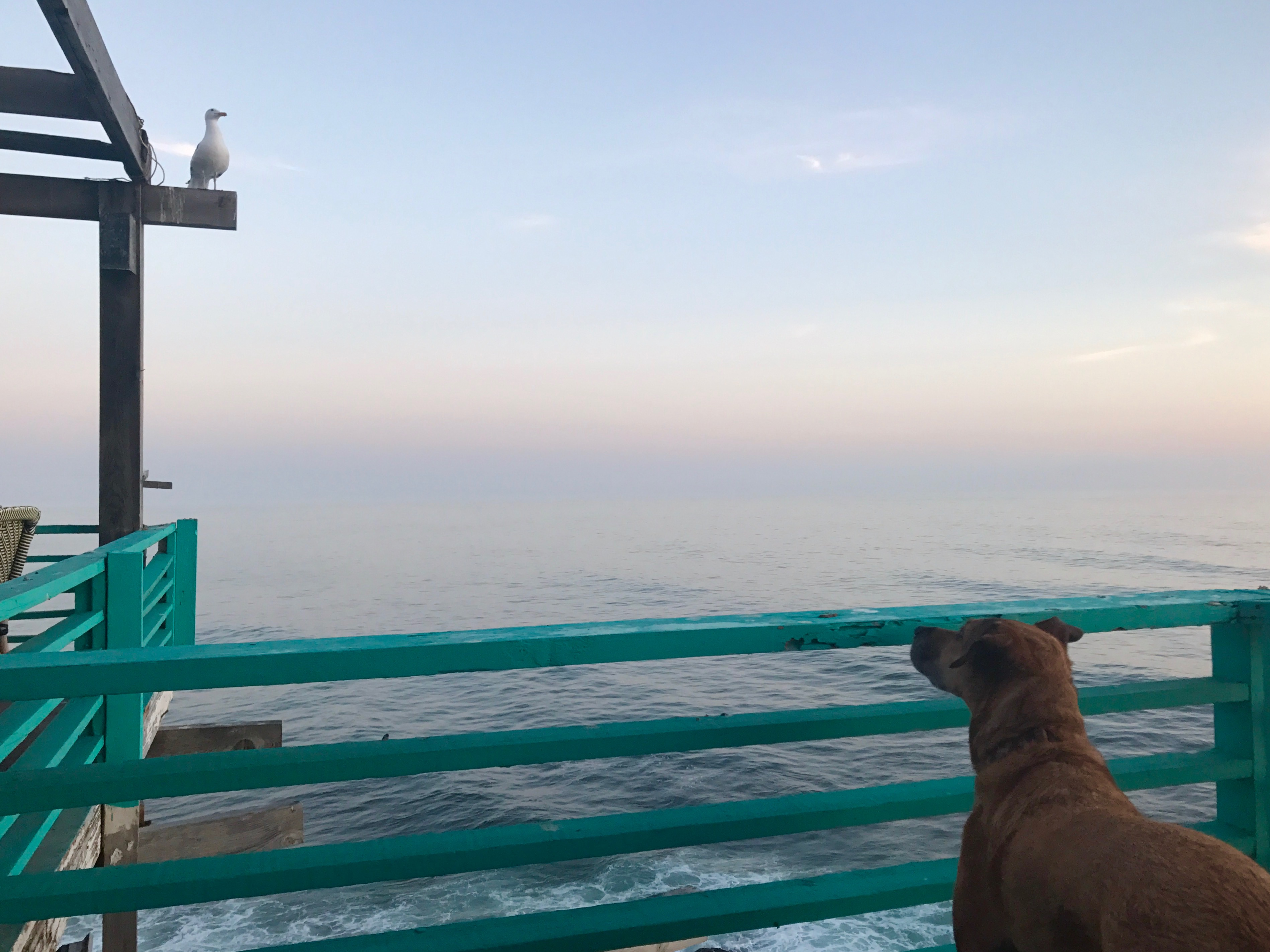 Taking Your Dog to Mexico - Our Story San Diego Pet Photographer ...