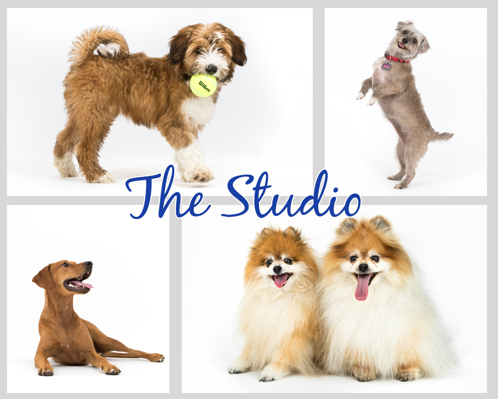 best pet photo session studio