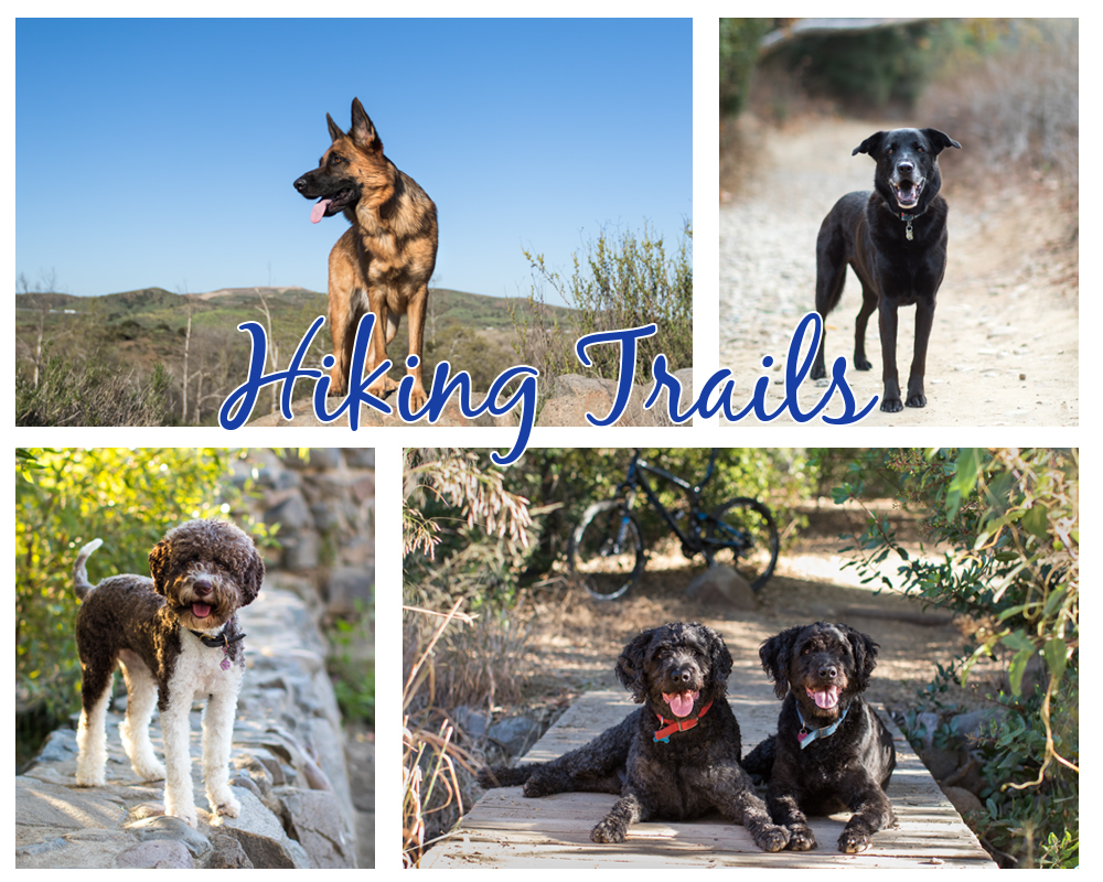 best pet photography hiking session locations