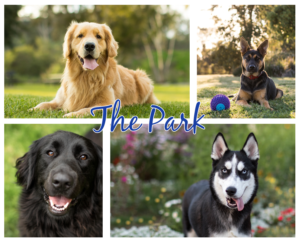 best pet photo session parks
