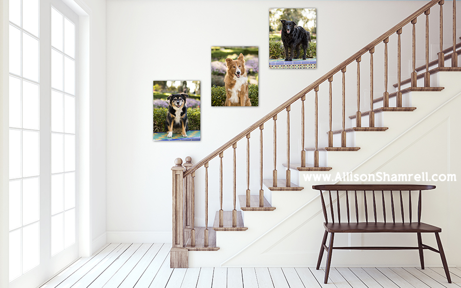 pet photography canvases