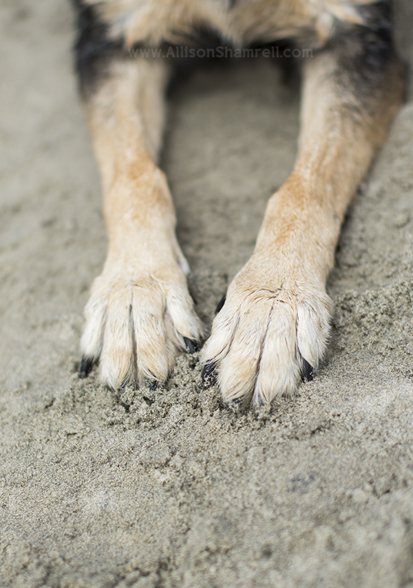 hound mix paws