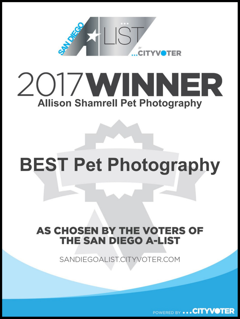 best pet photographer certificate