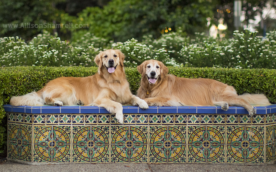 dogs in balboa park